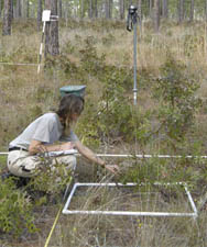 Data being collected in sandhill reference plot
